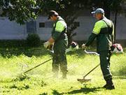 Валка обрезка деревьев,  покос травы,  вывоз листвы к/г мусора