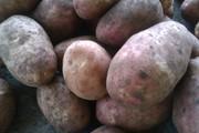 Картофель отборный Радриго(красный),