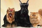 стрижка собак и котов в Гомеле