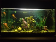 Продам свой аквариум 200 литров (комплект)