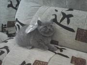 плюшевые котята Гомель
