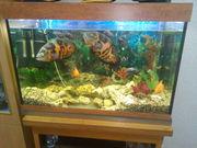 аквариум 250 л. с прекрасными рыбами