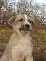 СТЁПА - милый щеночек в дар