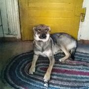 Няша - душевная собака в дар